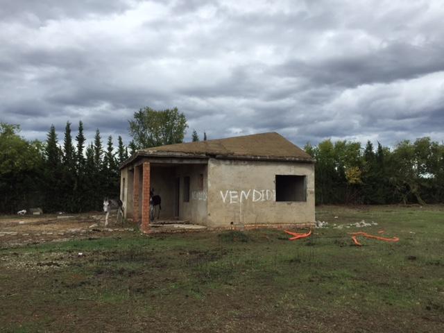 Terreno en venta,  en Carmona, RUSTICA CORZO-CAUDAL